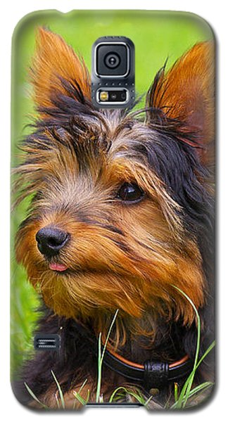 My Little Dog Galaxy S5 Case
