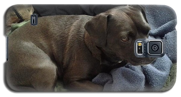 Galaxy S5 Case featuring the photograph My Puppy Bella by Jewel Hengen