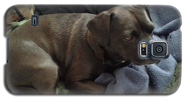 My Puppy Bella Galaxy S5 Case by Jewel Hengen