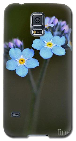 Myosotis Galaxy S5 Case by Sylvie Leandre