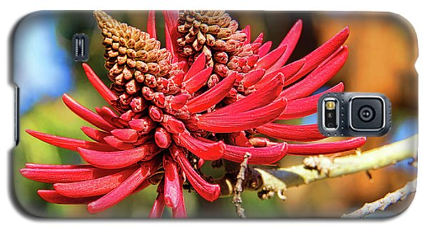 Naked Coral Tree Flower Galaxy S5 Case