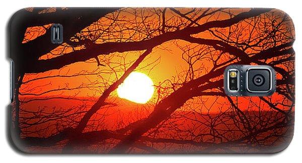 Naked Tree At Sunset, Smith Mountain Lake, Va. Galaxy S5 Case