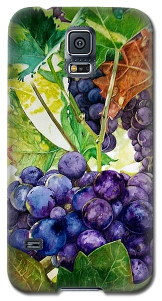 Napa Harvest Galaxy S5 Case by Lance Gebhardt