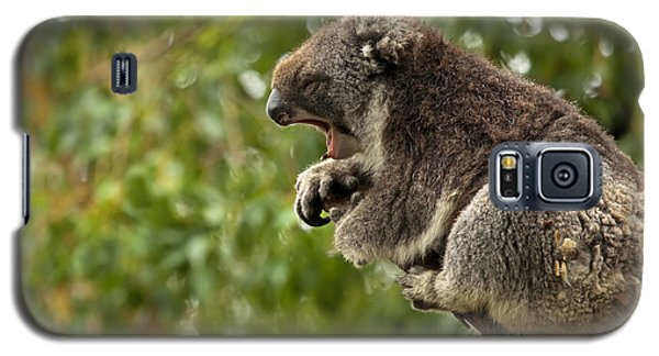 Koala Galaxy S5 Case - Naptime by Mike  Dawson