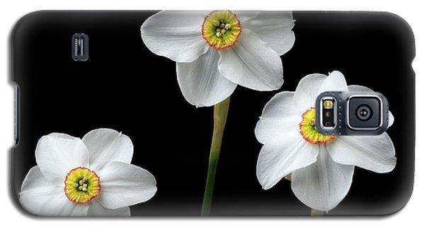 Narcissus 'poeticus' Galaxy S5 Case