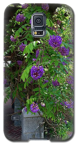 Galaxy S5 Case featuring the painting Native Wisteria Vine I by Angela Annas