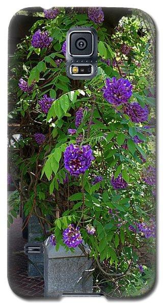 Native Wisteria Vine I Galaxy S5 Case