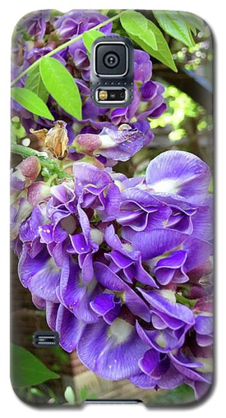 Galaxy S5 Case featuring the photograph Native Wisteria Vine II by Angela Annas