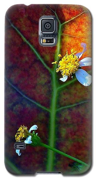 Natural 10 17g Galaxy S5 Case