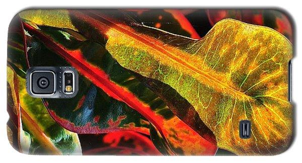 Natural 9 17c Galaxy S5 Case