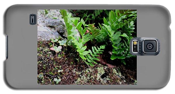 Natural Still Life #4 Galaxy S5 Case