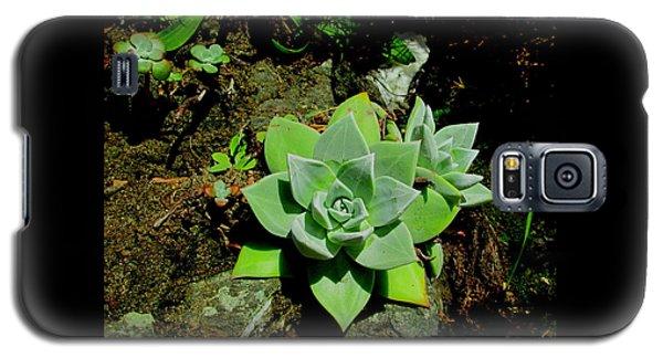 Natural Still Life #9 Galaxy S5 Case