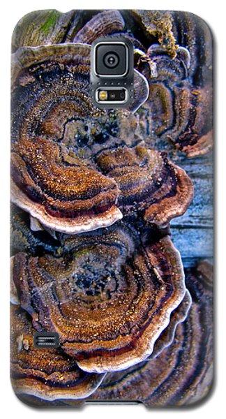 Natural World Fans Galaxy S5 Case by Debra     Vatalaro