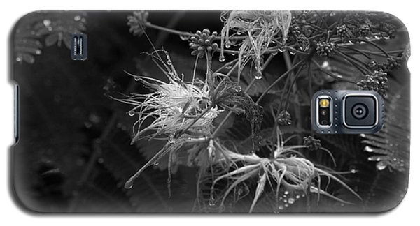 Nature's Decor Galaxy S5 Case by Jeanette C Landstrom