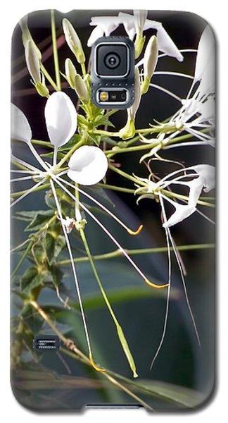 Nature's Design Galaxy S5 Case