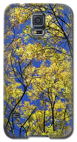Galaxy S5 Case featuring the photograph Natures Magic - Original by Rebecca Harman