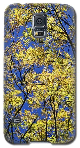 Natures Magic - Original Galaxy S5 Case by Rebecca Harman