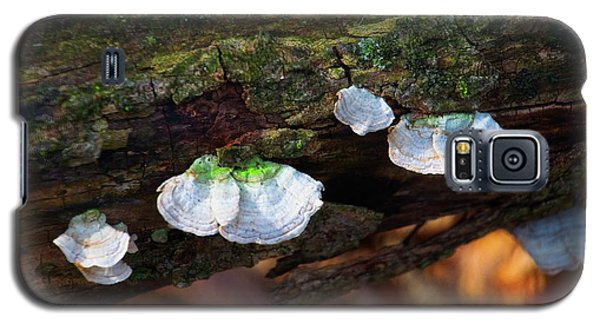 Galaxy S5 Case featuring the photograph Natures Ruffles - Cascade Wi by Mary Machare