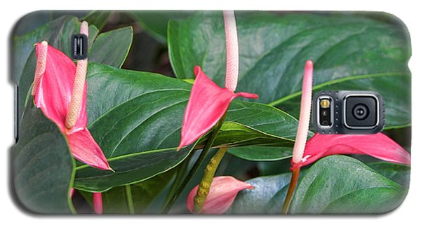 Naural Asapanthus Flowers Galaxy S5 Case by Linda Phelps
