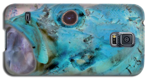Galaxy S5 Case featuring the photograph Nautical Beach And Fish #1 by Debra and Dave Vanderlaan
