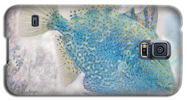 Galaxy S5 Case featuring the photograph Nautical Beach And Fish #2 by Debra and Dave Vanderlaan