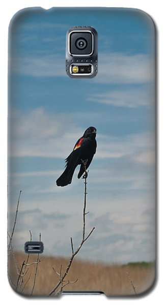 Galaxy S5 Case featuring the photograph Nebraska Red-winged Black Bird by Joshua House