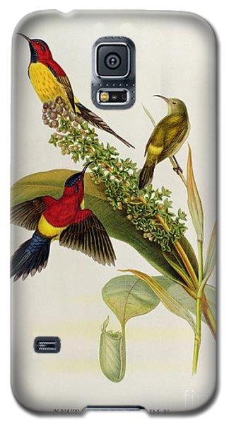 Audubon Galaxy S5 Case - Nectarinia Gouldae by John Gould