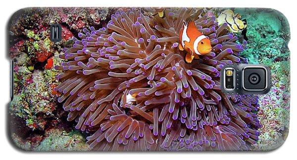 Nemo's Home Galaxy S5 Case by Joerg Lingnau