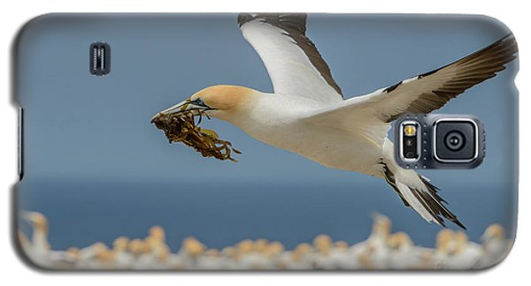 Galaxy S5 Case featuring the photograph Nest Building by Werner Padarin