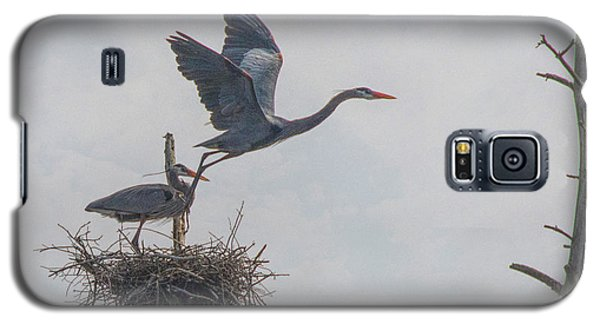 Nesting Great Blue Heron Galaxy S5 Case