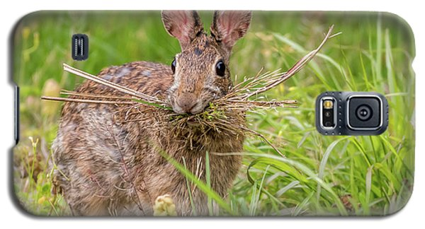 Nesting Rabbit Galaxy S5 Case by Terry DeLuco