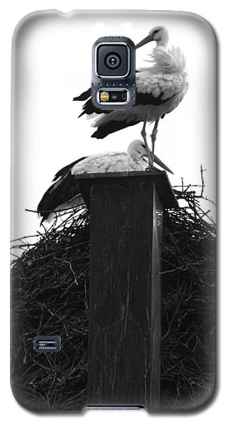 Nesting Storks Galaxy S5 Case