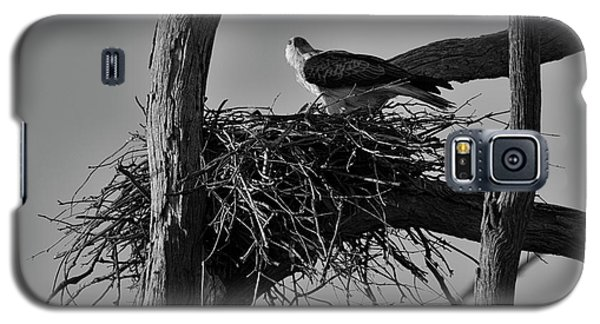 Galaxy S5 Case featuring the photograph Nesting V2 by Douglas Barnard