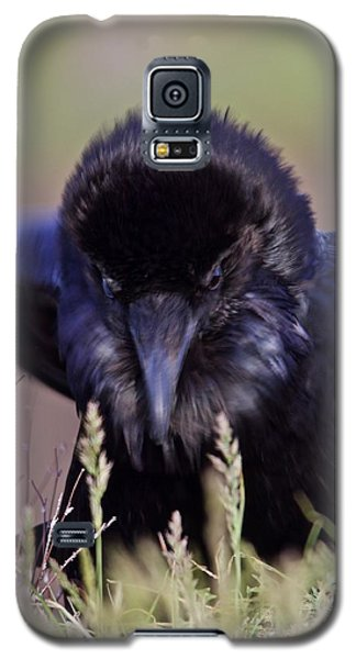 Galaxy S5 Case featuring the photograph Nevermore by Todd Kreuter