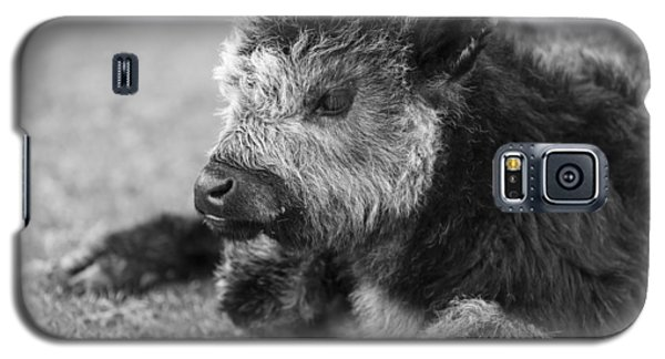 New Calf Galaxy S5 Case