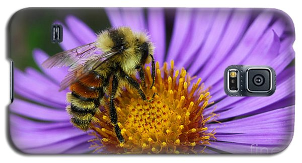 New England Aster And Bee Galaxy S5 Case by Steve Augustin