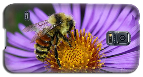 New England Aster And Bee Galaxy S5 Case