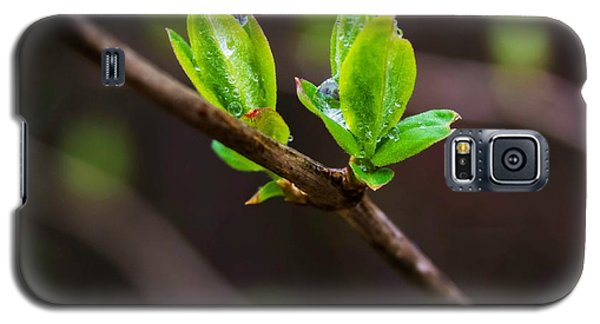 New Growth In The Rain Galaxy S5 Case