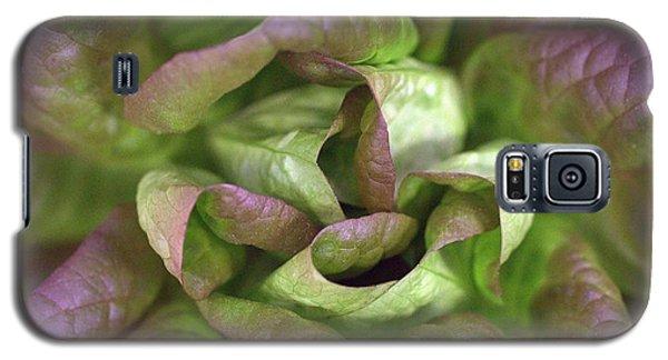 New Lettuce Galaxy S5 Case by Joseph Skompski