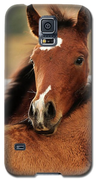 Galaxy S5 Case featuring the photograph New Life by Sharon Jones