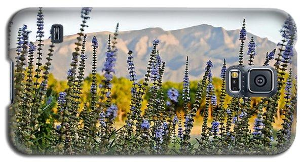 Santa Ana Beauty Galaxy S5 Case by Gina Savage