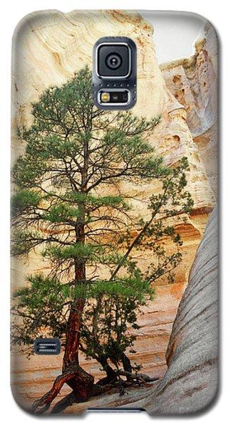 New Mexico Tent Rocks Slot Canyon Tree Landscape Galaxy S5 Case by Andrea Hazel Ihlefeld