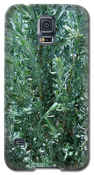 New Sage Galaxy S5 Case