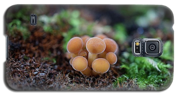Newborn Mushroom Close-up Galaxy S5 Case