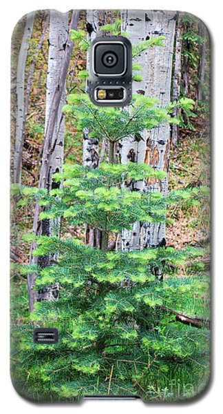 Galaxy S5 Case featuring the photograph Next Years Christmas Tree by Donna Greene