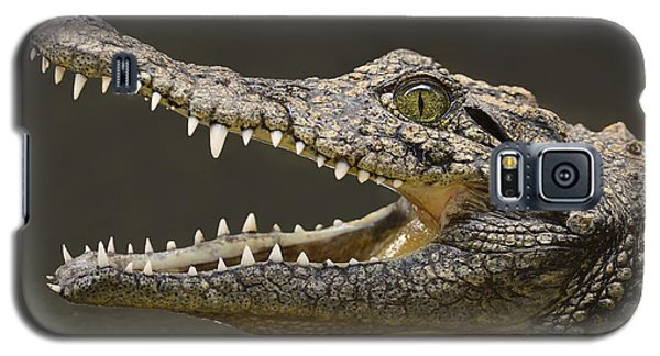 Nile Crocodile Galaxy S5 Case