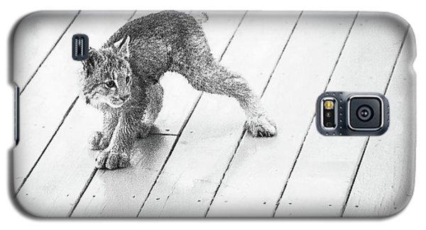 Ninja Lynx Kitty Bw Galaxy S5 Case