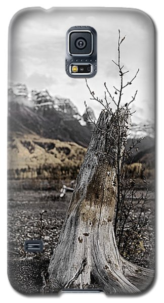 Nizina River Tree Stump Galaxy S5 Case