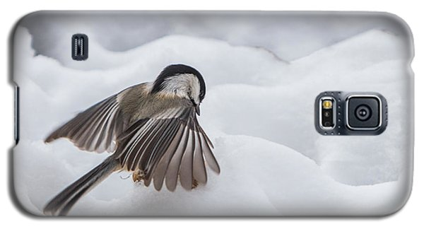 Chickadee - Wings At Work Galaxy S5 Case