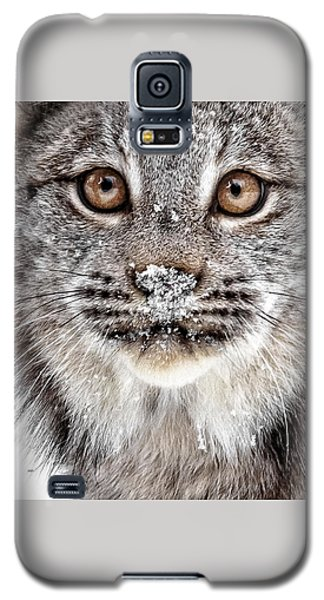 No Mouse This Time Galaxy S5 Case